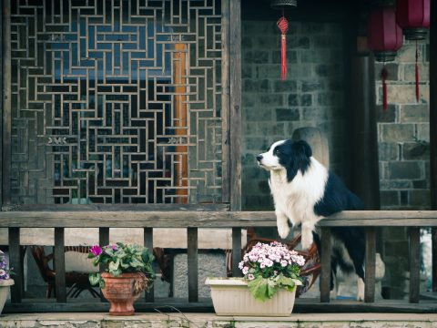 year of the dog 2018, lunar new year, lny year of the dog