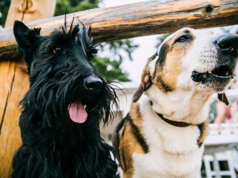 dog friendly san diego, dog parks san diego, dogs san diego